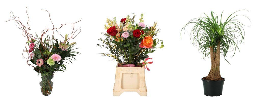 Bloemen en planten fotografie 2 Orbitvu